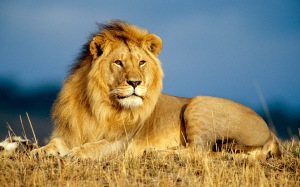 lion-animal-hd-wallpapers-free-download-free-wallpapers-animals-photo-lion-hd-wallpaper